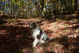 thanksgiving pet photos pet friendly vacations in the pocono mountains