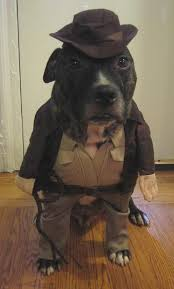 Indiana Jones Halloween Costumes 30 Halloween Costumes Dogs Put Smile Face