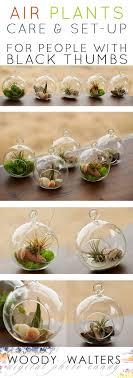 best 25 air plant terrarium ideas on terranium ideas