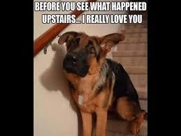 Best Dog Memes - 15 best dog memes of all time youtube