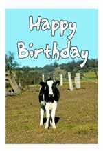 cow greeting cards cow birthday card with quotes to wish a happy birthday