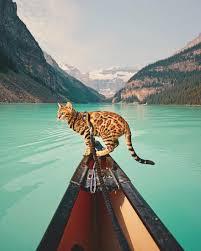 meet suki the traveling cat who u0027s living a better life than you