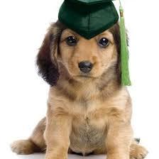 dog graduation cap puppy classes eastown veterinary clinic grand rapids mi