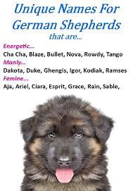 australian shepherd names male german shepherd names male u0026 female gsd names female german