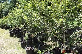 organic fruit trees and bushes