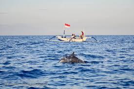 dolphin watching at lovina beach bali magazine