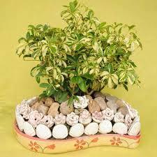 decorative indoor plants decorative indoor plants my web value