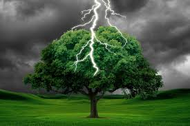 what happens when a tree is struck by lightning science abc