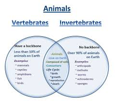 vertebrates and invertebrates worksheets pdf vertebrates