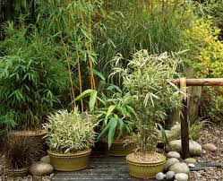 61 ideen für bambus im garten u2013 als sichtschutz oder deko