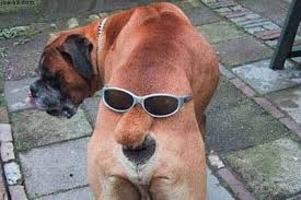 Dog With Glasses Meme - 20 cute dogs with glasses amazing creatures