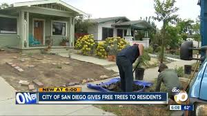Tree San Diego Get A Tree For Free In City Of San Diego 10news Kgtv Tv San Diego