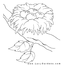 birds of africafree coloring page page humming bird bird