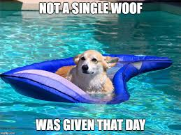 Pool Meme - 10 corgi memes that will make you laugh what every dog deserves