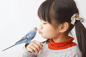 should you buy your child a pet bird