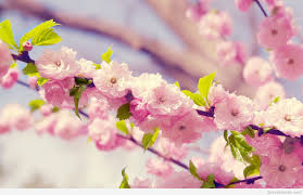 spring flowers wallpapers hd