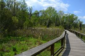 plants native to south carolina things to do in charleston sc sc attractions travelingmom