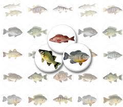small fish printable 1 circles bottlecap images