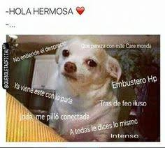 Memes De Chihuahua - perro chihuahua meme s mega memeces funny pinterest meme