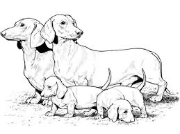 baby puppy coloring page free download