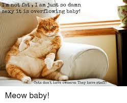 wi m not fat i am just so damn sexy it is overflowing baby cats