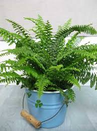 Plants To Keep In Bathroom 10 Best Air Filtering House Plants According To Nasa
