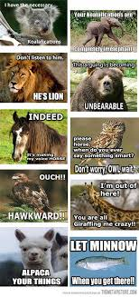 Funny Animals Meme - all of the animals the meta picture