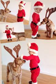 halloween animal costume ideas best 25 dog christmas costumes ideas on pinterest dog christmas