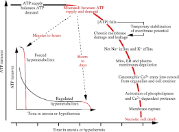 mechanisms of cell survival in hypoxia and hypothermia journal