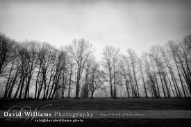 trees in the mist david williams photography