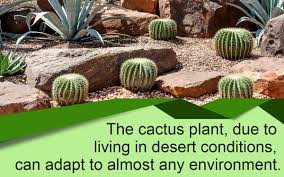 how to build a cactus garden