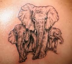 elephant family tattoo general pinterest elephant family
