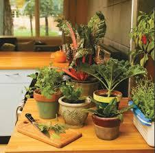 preventing plant disease in your indoor kitchen garden quarto homes