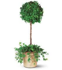Ny Topiary - ivy topiary tall plant in new york ny madison avenue florist ltd