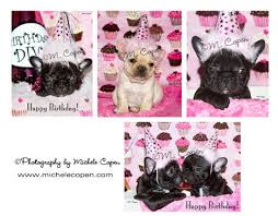 bulldog birthday cards assorted set of cards 4 pack