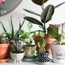 House Plant Urban Jungle Bloggers I Will Survive Featured Jpg
