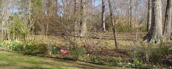 garden design garden design with where to plant daffodils with