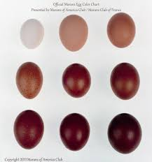 official marans egg color chart presented by marans of america