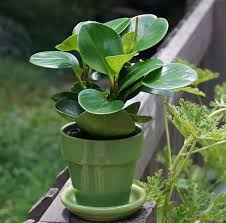 how to winterize your outdoor potted plants