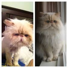 cat before and after pictures show the effect of a good home
