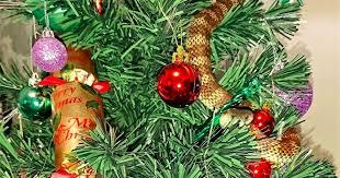 highly venomous snake makes like tinsel and chills on a christmas tree