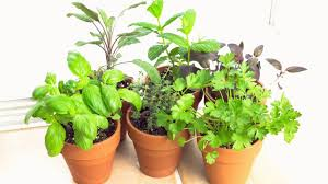 How To Grow Vegetables by How To Grow Vegetables In Pots And Containers Youtube