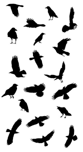 best 25 black bird fly ideas on pinterest colors of raven