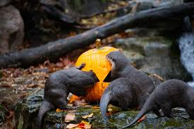 animals halloween photos zoo animals celebrate halloween the only way they know how