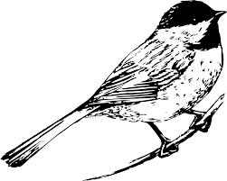 clipart black capped chickadee