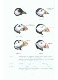 identification of european non passerines a bto field guide jeff