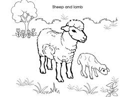 picture sheep lamb coloring coloring sky