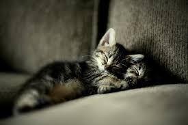 beautiful kittens beautiful kittens and friends love meow