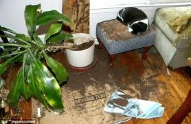 how to keep cats out of plants how to keep cats out of house