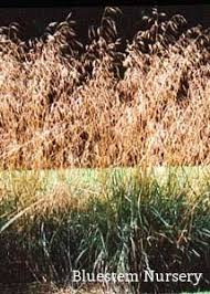 65 best cool season ornamental grasses images on